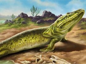 鱼是怎么爬上陆地的?华大等机构同期2篇Cell论文揭示脊椎动物从水生到陆生的演化之谜!